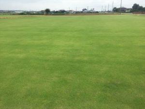 ゴルフのグリーン状にキレイに管理された芝