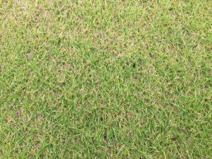 日本で一番良く使われる芝の種類